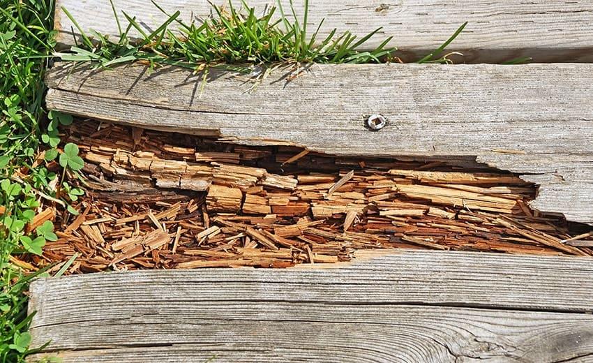 Best Wood Hardeners 2020 – Reviews